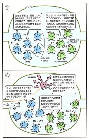 生基礎はじめからていねいに_immune3comic.jpg