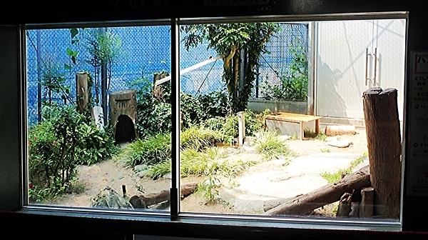 171229 対馬_対馬野生生物保護センター_飼育展示スペース.JPG