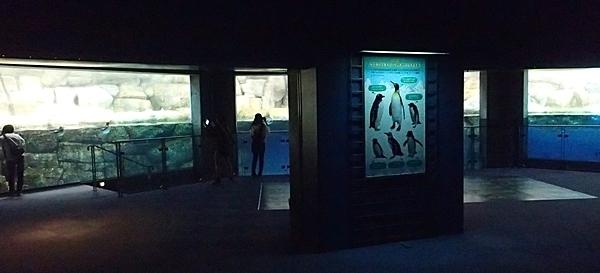 180505 八景島シーパラダイス70 ペンギン展示1.JPG