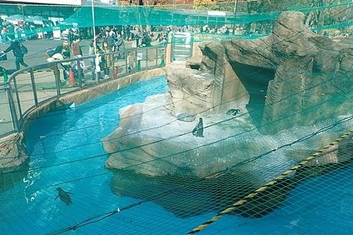 190103 東山zoo_ペンギン舎1711.JPG