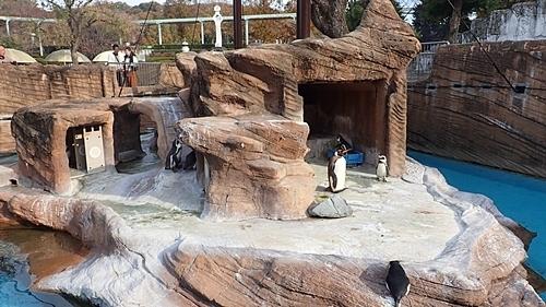 190103 東山zoo_ペンギン舎1811内側.JPG