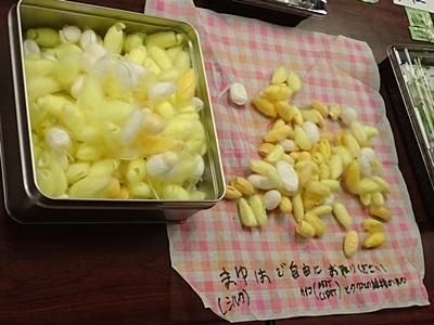 190519東大五月祭0518 (128)農学部_東大の農力.JPG