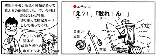080116植物ホルモン(1)-1