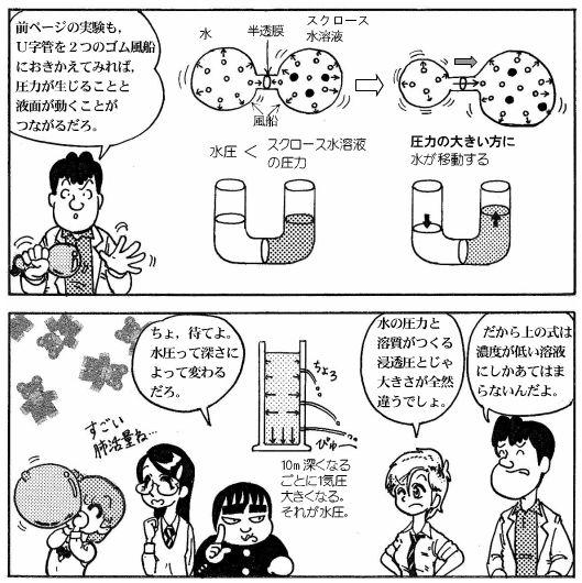moebio081006_浸透圧-4-2.JPG