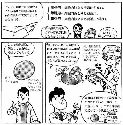 moebio081014_浸透圧-6-2.JPG