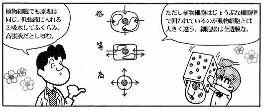 moebio081021_浸透圧-8-1.JPG