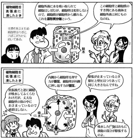 moebio081021_浸透圧-8-2.JPG