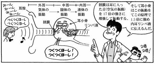 090513 耳の構造(6)-1
