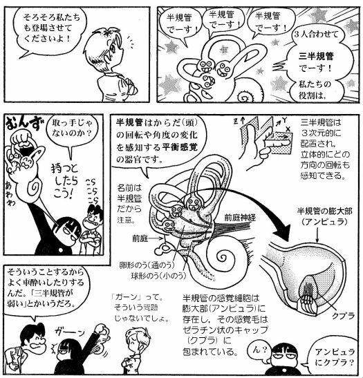 耳の構造(10)-2