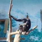 160331天王寺動物園チンパンジー.JPG