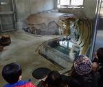 160331天王寺動物園トラコジロウ.JPG