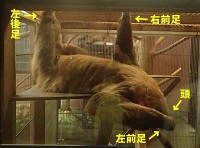 170816_みさき公園ナイトズー_32ナマケモノ説明.JPG
