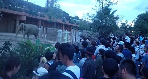 170818東山動物園ナイト02ゾウ.JPG