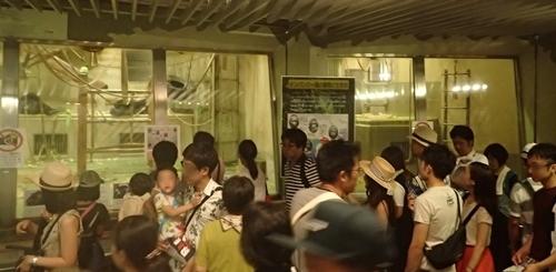 170818東山動物園ナイト08チンパンジー.JPG