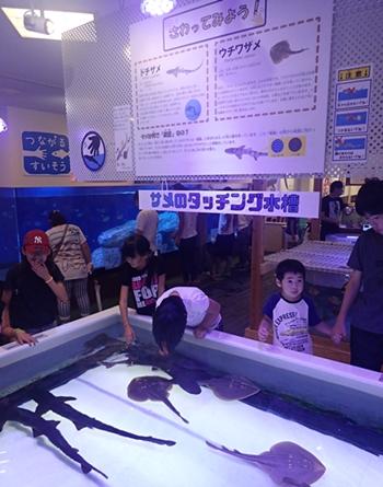 170820 南知多ビーチランド13ふれあいおさかな館サメ.JPG
