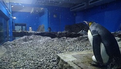 170820 南知多ビーチランド41ペンギン館.JPG