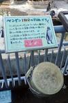 1709江戸川区自然動物園 34フンボルトペンギン_羽毛.JPG
