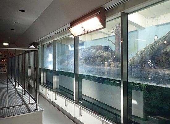1803箱根園水族館 (10)ケープペンギン展示1.JPG