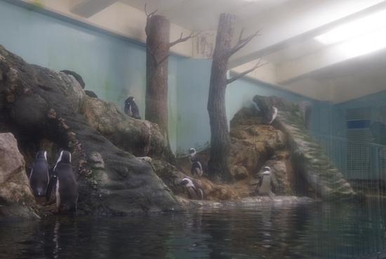 1803箱根園水族館 (10)ケープペンギン展示2.JPG