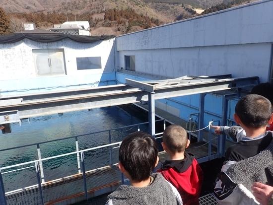 1803箱根園水族館 (4)大水槽上.JPG