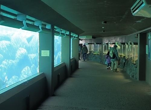 1803箱根園水族館 (8)バイカルアザラシ水槽の下.JPG