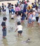180722長崎ペンギン水族館60ふれあいペンギンビーチ_ペンギンと水遊び.JPG