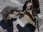 180815 森きらら45_ペンギンおねだり.JPG