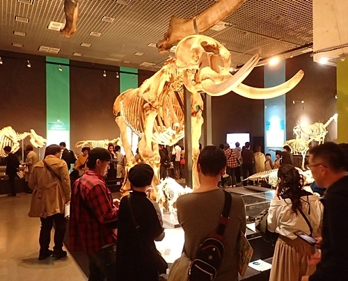 1904 科博_哺乳類展2_05アフリカゾウ骨格等.JPG
