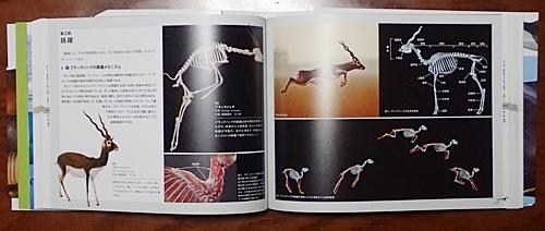 1904 科博_哺乳類展2_99図録1.JPG