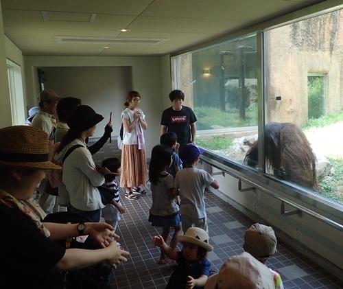 いしかわ動物園_オランウータン1近い.JPG