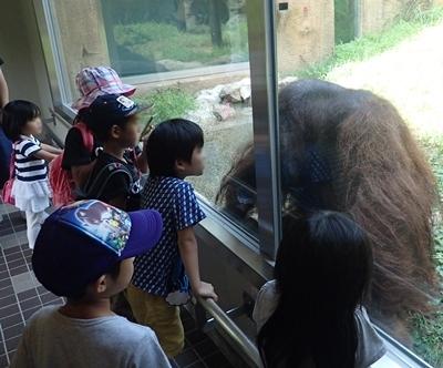 いしかわ動物園_オランウータン1近い近い.JPG