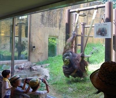 いしかわ動物園_オランウータンブランコ.JPG