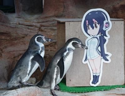 みさき公園1708_24 フンボルトペンギン&けもフレ看板.JPG