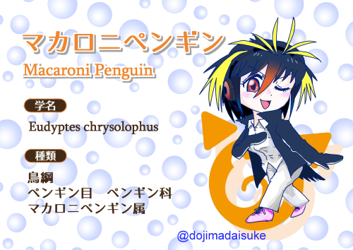オリフレ図鑑マカロニペンギン500px.png