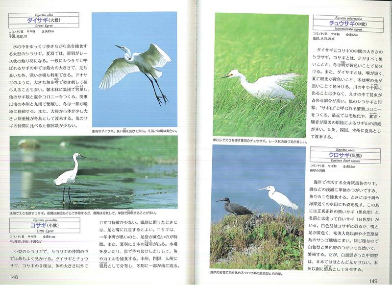 080509 野鳥カタログp148