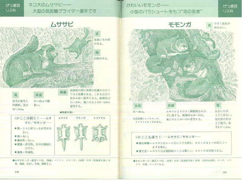 080509 動物ウォッチング図鑑ムササビ