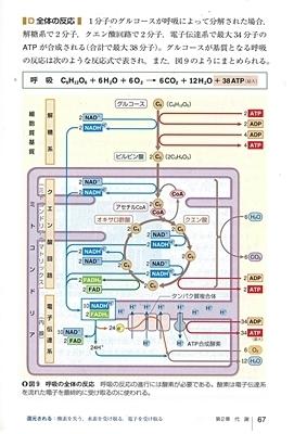 教科書S社_呼吸.jpg