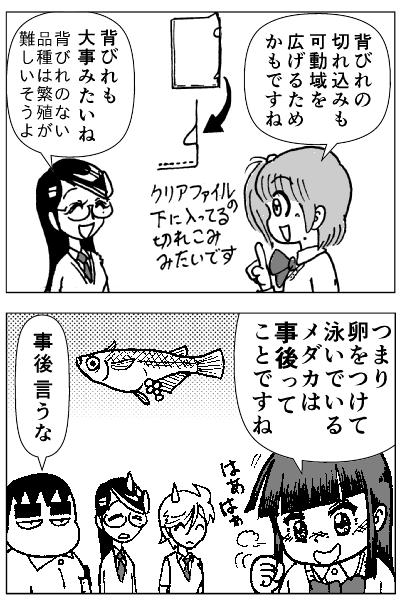 メダカの雄雌p01-3.png