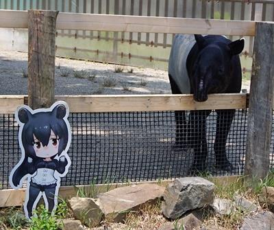 東武動物公園マレーバク&看板.JPG