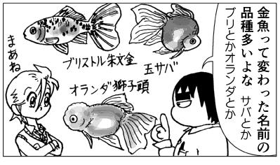 観賞魚の品種名01.png