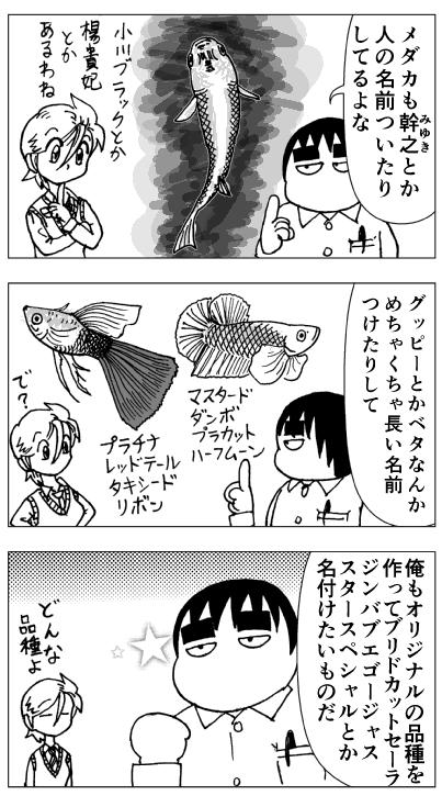 観賞魚の品種名02-04.png