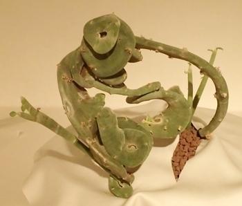 150718 ウルトラ植博14石化セネキオ.JPG