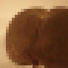 150718 ウルトラ植博16フタゴヤシ.JPG
