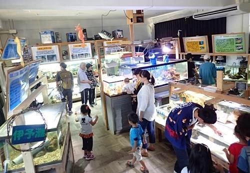 150919 13 メイン水族館.JPG