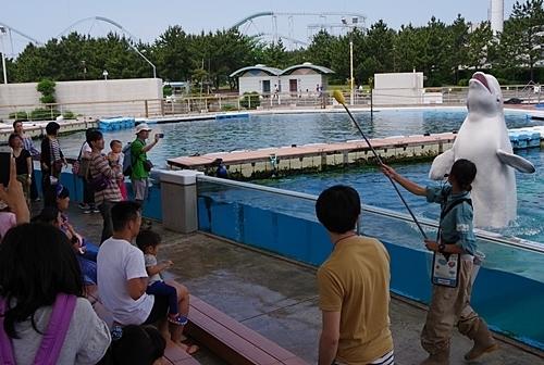 180505 八景島シーパラダイス50 シロイルカ水ぶっかけ.JPG