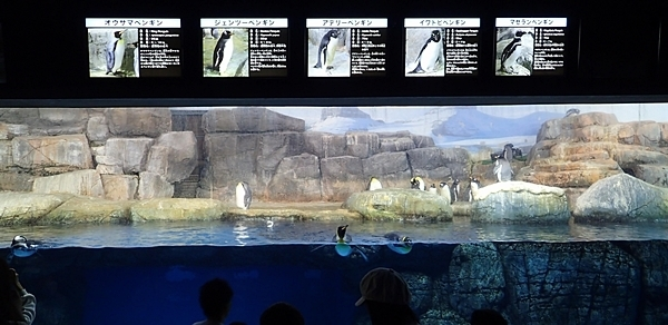 180505 八景島シーパラダイス70 ペンギン展示2.JPG