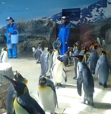 180722長崎ペンギン水族館65ペンギンお食事タイム_キングペンギン.JPG