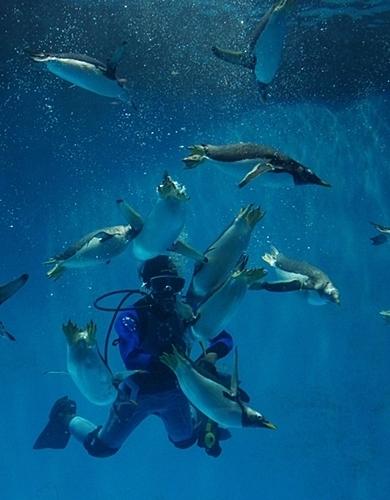 180722長崎ペンギン水族館85ダイバーとペンギン食事タイム.JPG