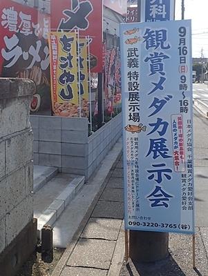180917 0鑑賞メダカ展示会松戸.JPG