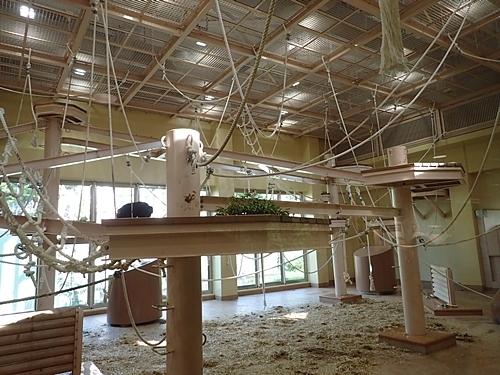 190103 東山zoo_チンパンジー舎1811-0.JPG